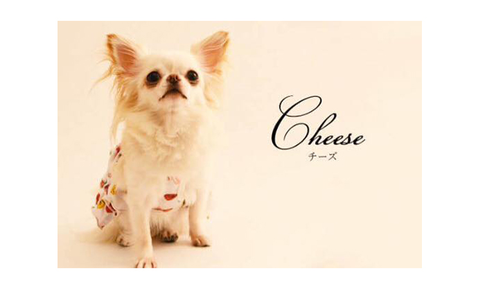 マ・シェールコゼット?の看板犬チーズ