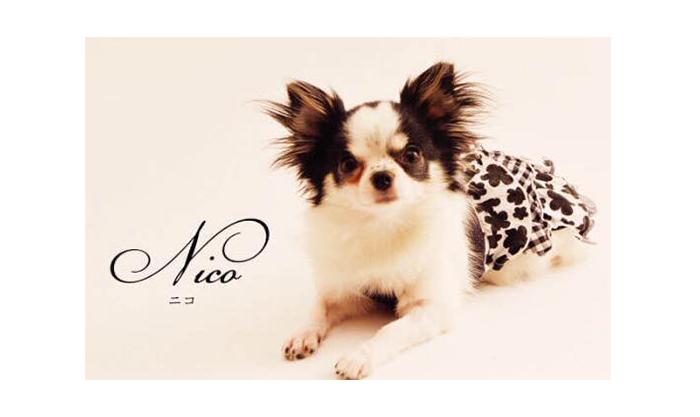 マ・シェールコゼット?の看板犬ニコ